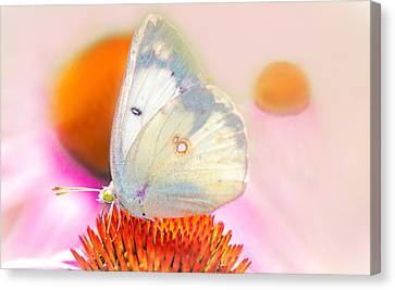 Butterfly Canvas Print by Marion Johnson