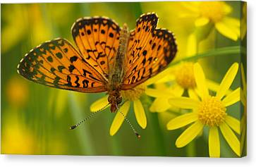 Canvas Print featuring the photograph Butterfly by James Peterson