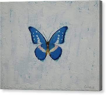 Butterfly Canvas Print by Michael Creese