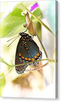Butterfly Nursery Canvas Print by Jon Woodhams