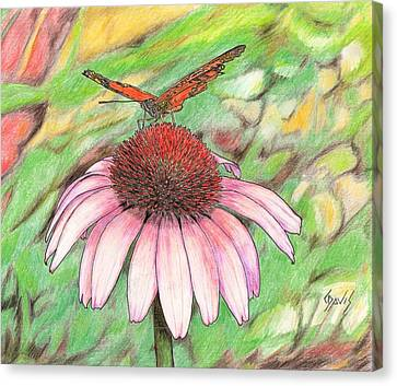 Butterfly On A Cone Flower Canvas Print by Lew Davis
