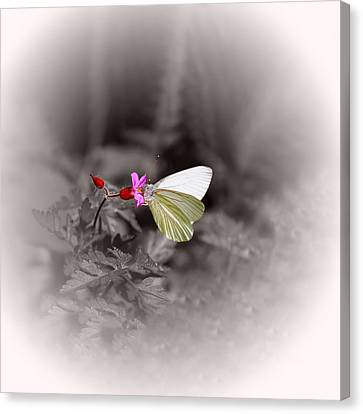 Canvas Print featuring the photograph Butterfly On A Pink Flower by Tracie Kaska