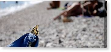 Butterfly On Beach Bag, Cala Luna Canvas Print by Panoramic Images