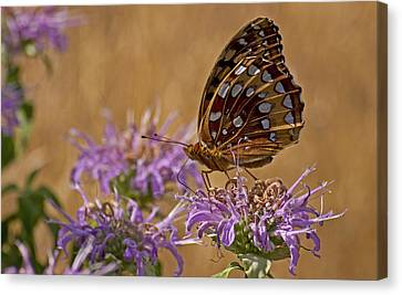 Butterfly On Bee Balm Canvas Print