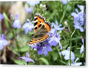 Butterfly On Blue Flower Canvas Print by Gordon Auld