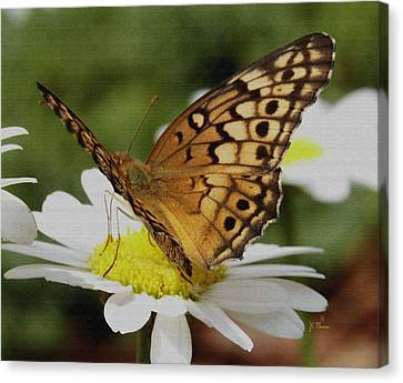 Canvas Print featuring the photograph Butterfly On Daisy by James C Thomas