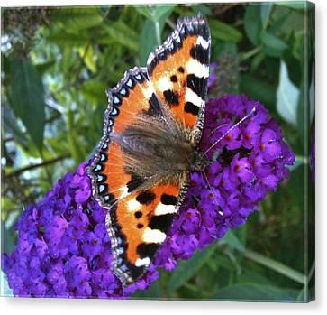 Butterfly On Flower Canvas Print by Beril Sirmacek
