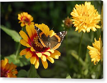 Butterfly On Flower Canvas Print by Charles Beeler