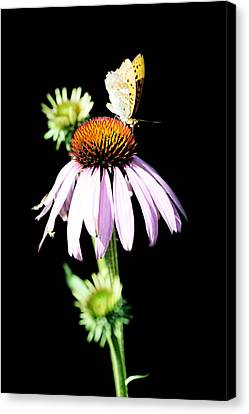 Painted Details Canvas Print - Butterfly On Flower by Tommytechno Sweden