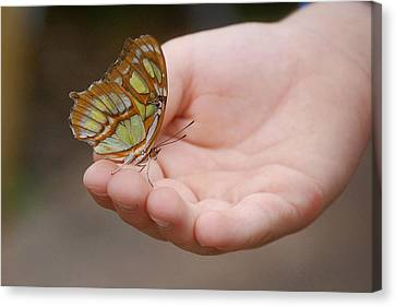 Canvas Print featuring the photograph Butterfly On Hand by Leticia Latocki