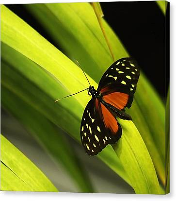Butterfly On Leaves Canvas Print by Art Block Collections
