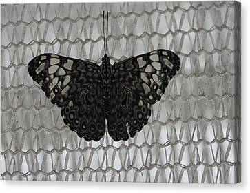 Canvas Print featuring the photograph Butterfly On Net by Bill Woodstock
