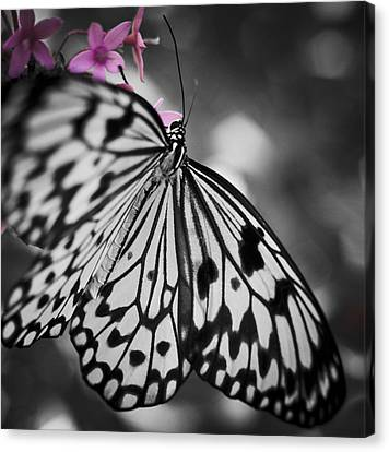 Butterfly On Pink Flowers Canvas Print