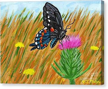 Butterfly On Thistle Canvas Print by Vicki Maheu