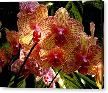 Canvas Print featuring the photograph Butterfly Orchids by Rodney Lee Williams
