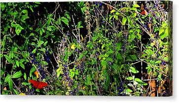 Canvas Print featuring the photograph Butterfly Power by David  Norman