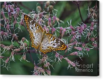 Canvas Print featuring the photograph Butterfly Soft Landing by Thomas Woolworth