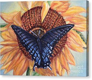 Butterfly Sunday Up-close Canvas Print by Kimberlee Baxter