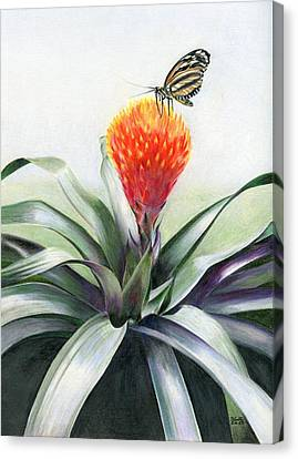 Butterfly Sunning In Costa Rica Canvas Print