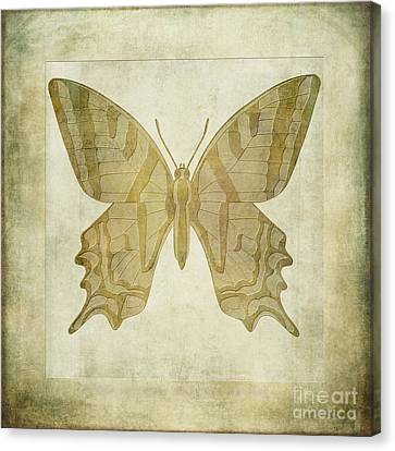 Butterfly Textures Canvas Print by John Edwards