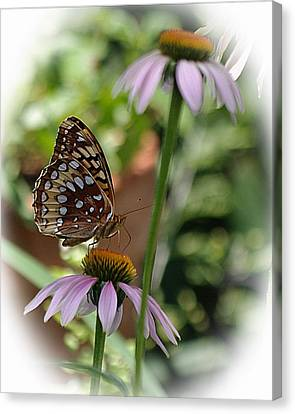 Butterfly Time Canvas Print by Karen McKenzie McAdoo