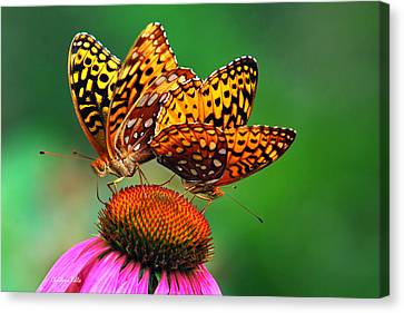 Canvas Print featuring the photograph Butterfly Twins by Christina Rollo