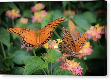 Jamesbarber Canvas Print - Butterfly Twins by James Barber