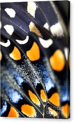 Butterfly Wings Canvas Print by Iris Richardson