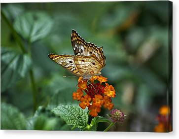 Canvas Print featuring the photograph Butterfly Wings Of Sun Light by Thomas Woolworth