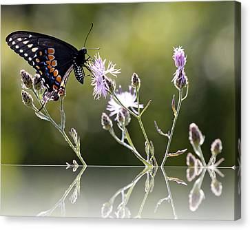 Canvas Print featuring the photograph Butterfly With Reflection by Eleanor Abramson