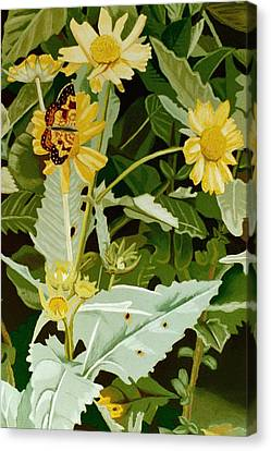 Butterfly Yellow  Canvas Print by Tanya Provines