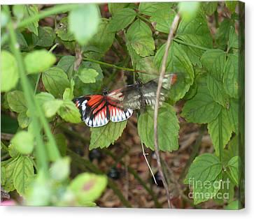 Butterfly1 Canvas Print by Kryztina Spence