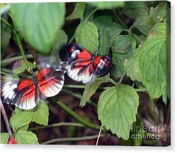 Butterfly7 Canvas Print by Kryztina Spence