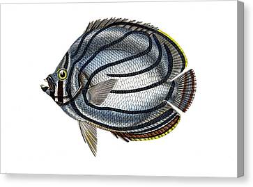 Butterflyfish Canvas Print