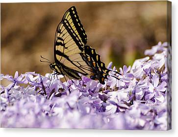 Brian Rock Canvas Print - Butterfy On Flowers by Brian Rock