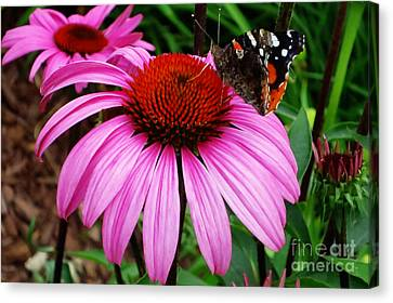 Butterly On Flower Canvas Print by Claudette Bujold-Poirier