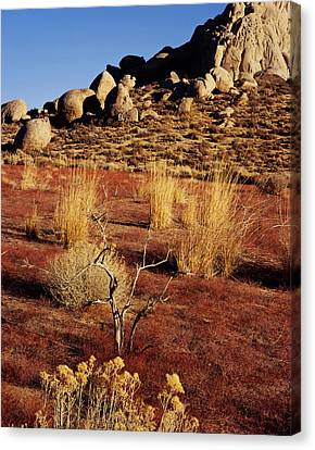Buttermilks - Red Brush Canvas Print