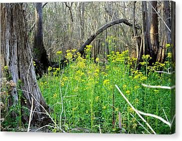 Butterweed Florida Wildflower Canvas Print by Debra Forand