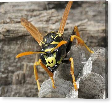 Buzz Off Canvas Print by Bruce  Morrell