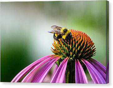 Buzz Off This One Is Mine Canvas Print