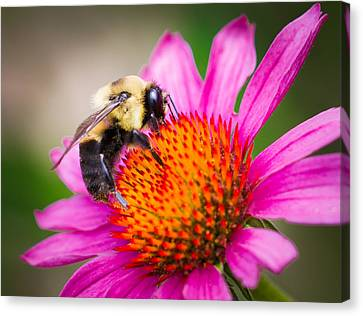 Buzzed In Eureka Springs Canvas Print by Annette Hugen