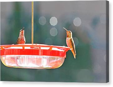 Buzzing Overhead Canvas Print by Lynn Bauer