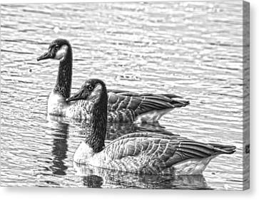 Bw Hdr Geese On The Pond I Canvas Print by Lesa Fine