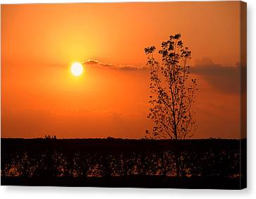 Canvas Print featuring the photograph By The Everglades by Lorenzo Cassina