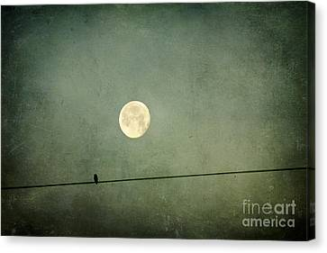 By The Light Of The Moon Canvas Print by Joan McCool