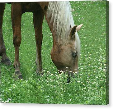 Out To Pasture Canvas Print by Barbara S Nickerson