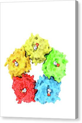 Cut-outs Canvas Print - C-reactive Protein Molecule by Ramon Andrade 3dciencia