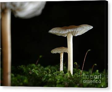 C Ribet Mushroom And Fungi Art Pearl Canvas Print by C Ribet