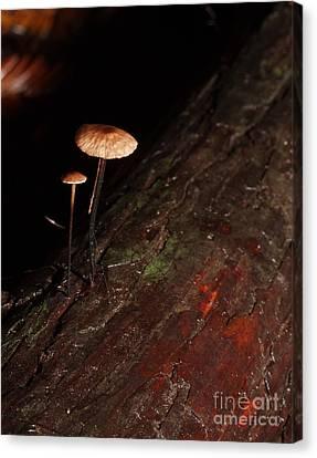 C Ribet Mushroom And Fungi Art The Sage Canvas Print by C Ribet