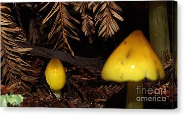 C Ribet Mushroom Art Forest Caress Canvas Print by C Ribet